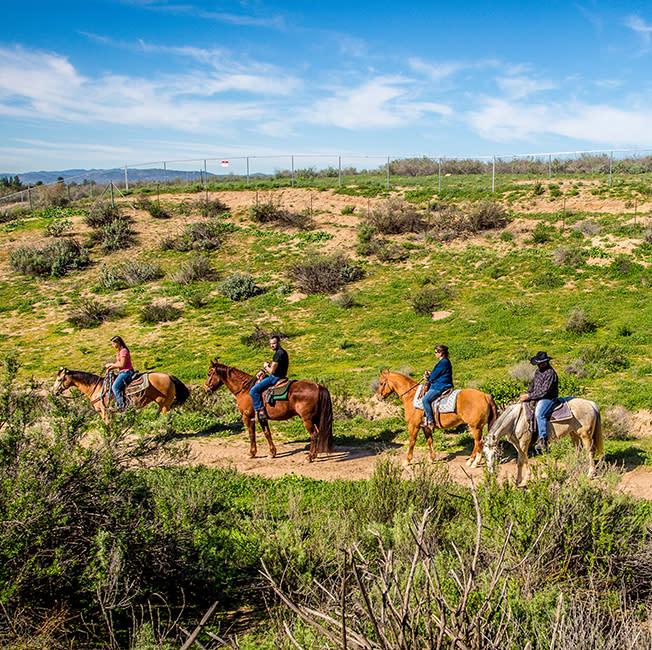 Horseback Riding in Temecula Wine Country