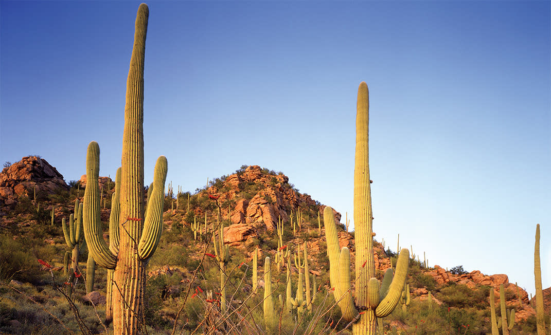 McDowell Sonoran Preserve View