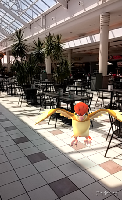 Pidgeotto at Eastview Mall's food court