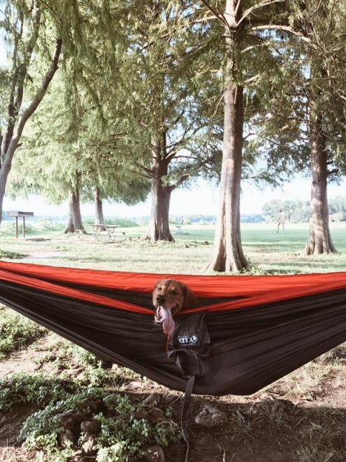 LSU Lakes dog asher