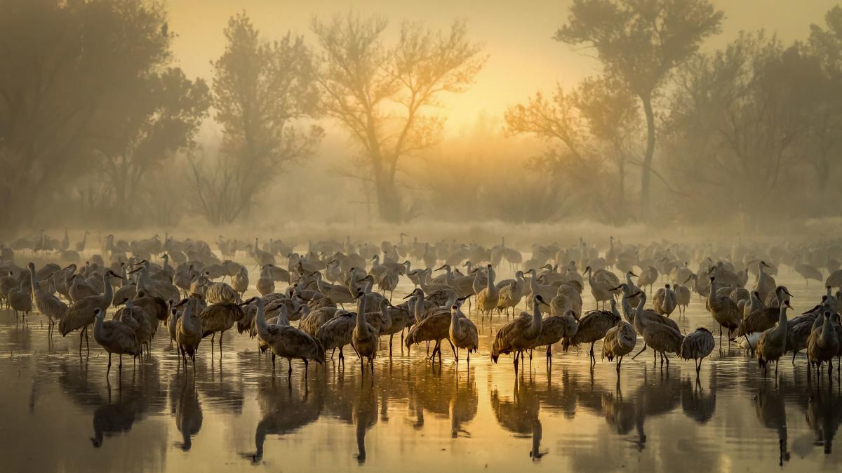 Foggy Sunrise in Bernardo