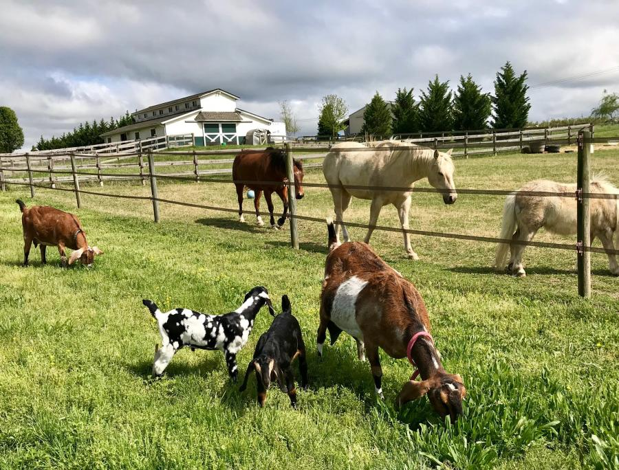 Horses and Goats at Hardscrabble Hollow Farm