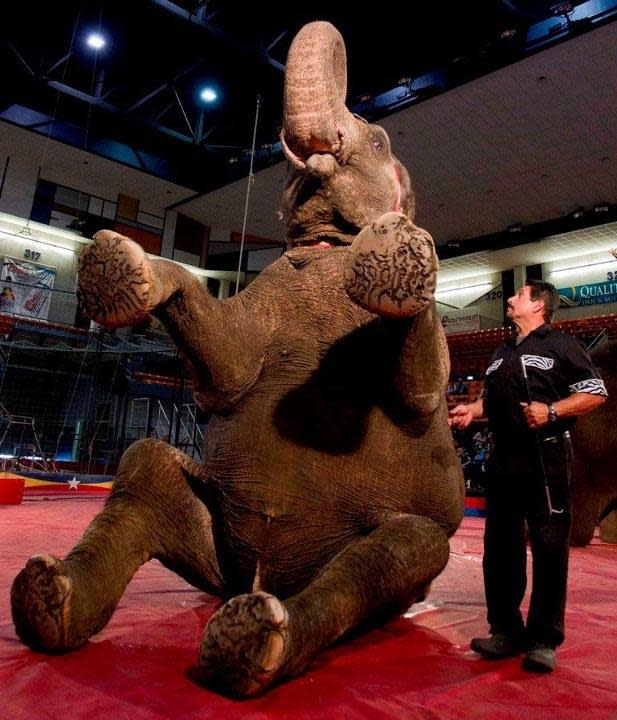 Circus Elephant. Photo courtesy of American Press.