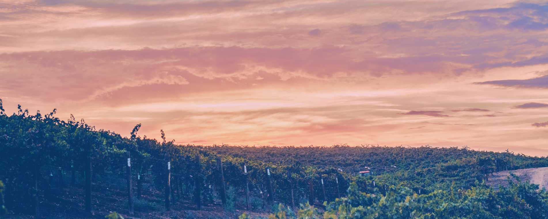 Vineyards In The Fall - Grapeline Wine Tours