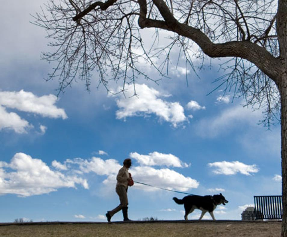 La de Dog Photography