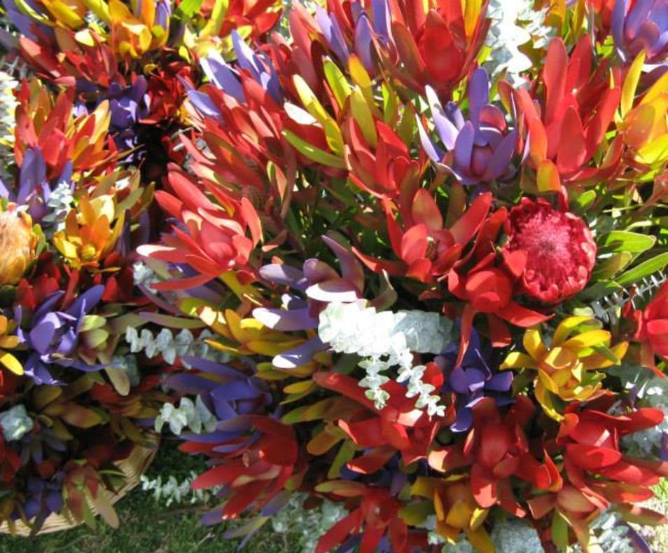 COD flowers