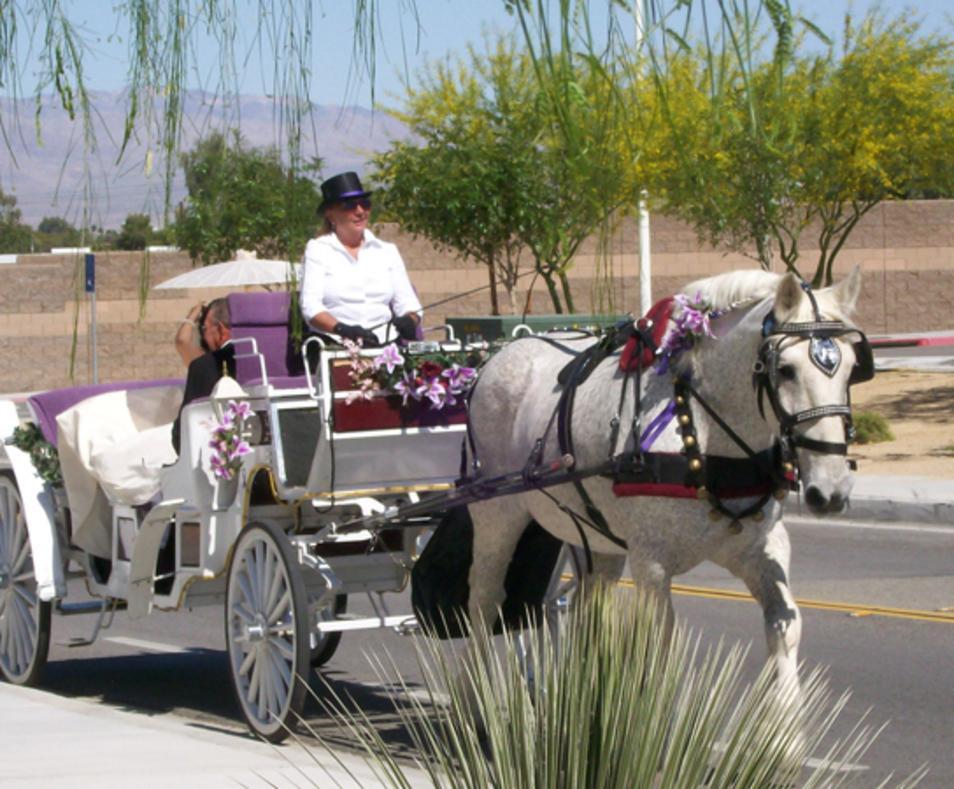 Big Horse Carriage Company