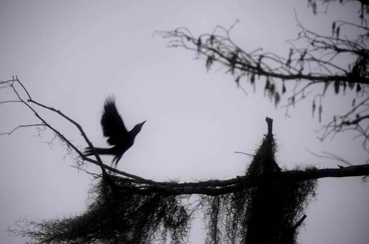 Bayou Vermilion Excursion: Bird on a Branch