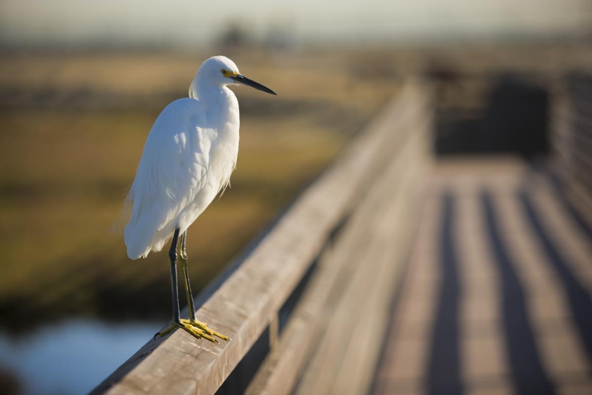 Bolsa Chica Birdwatching