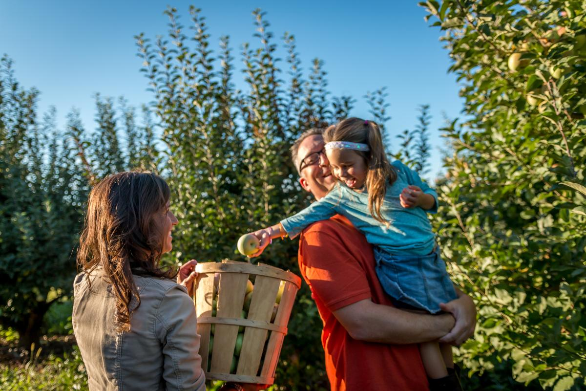Outdoors-Harvesting @ Strites Orchard