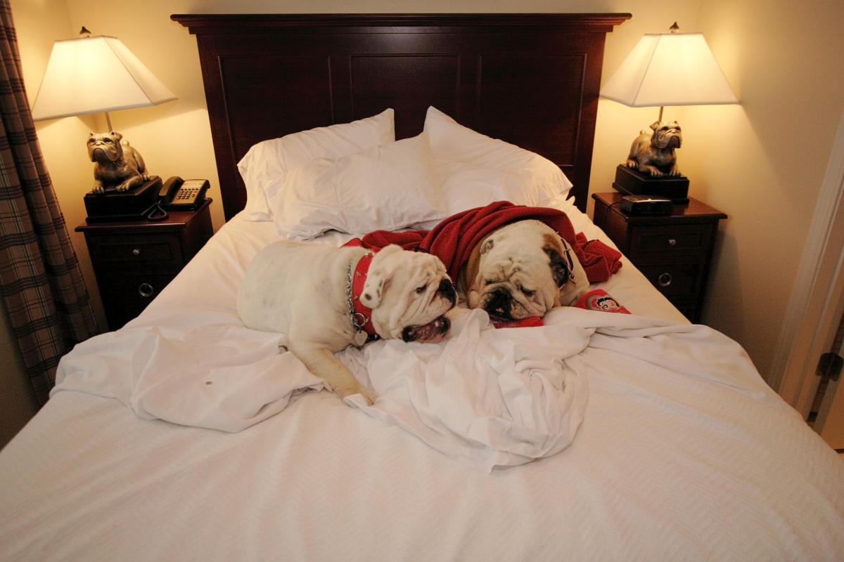 Bed Dog 2