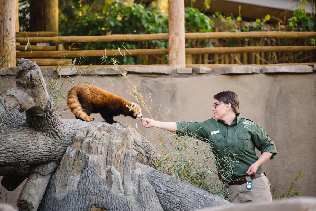 Red Panda at Utah's Hogle Zoo