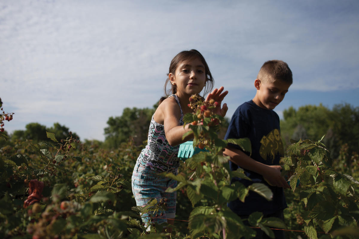 Life in Corrales, picking strawberries