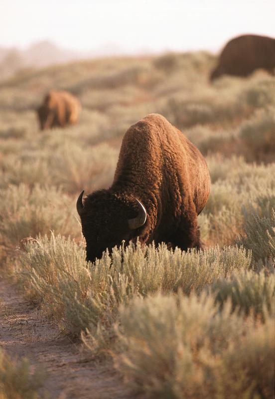 Sandsage Bison Range