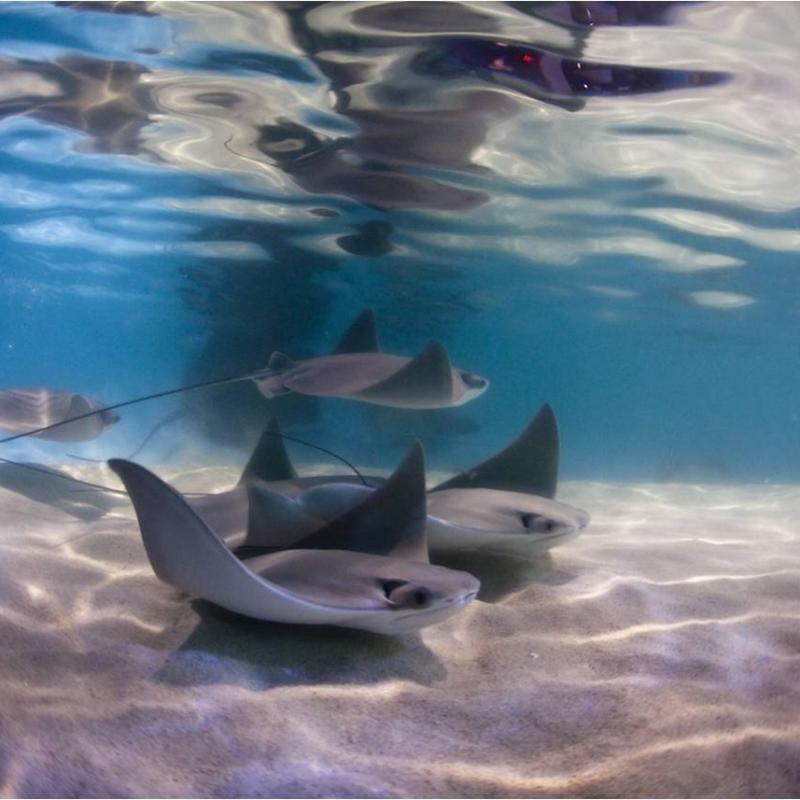 Arts & Culture - History & Museums - Virginia Aquarium - Virginia Aquarium 4.jpg