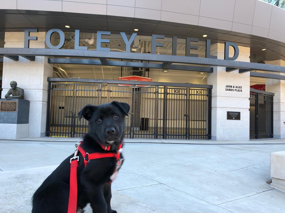 Pup foley stadium