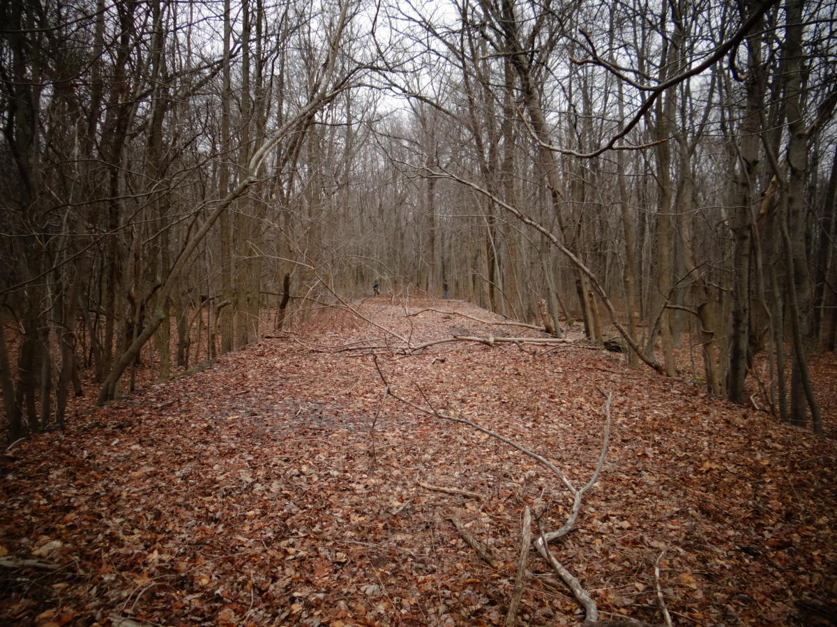 Delhaas Woods Ruins Foundation
