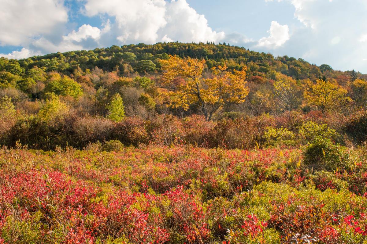 Fall at Graveyard Fields (9/27/17)