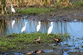 Day Trips: Cattail Marsh, Beaumont