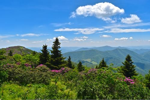 Grassy Ridge Bald at Roan Mountain
