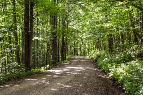 Road to Douglas Falls in Big Ivy in Barnardsville