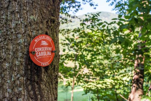 Wildcat Rock Trail