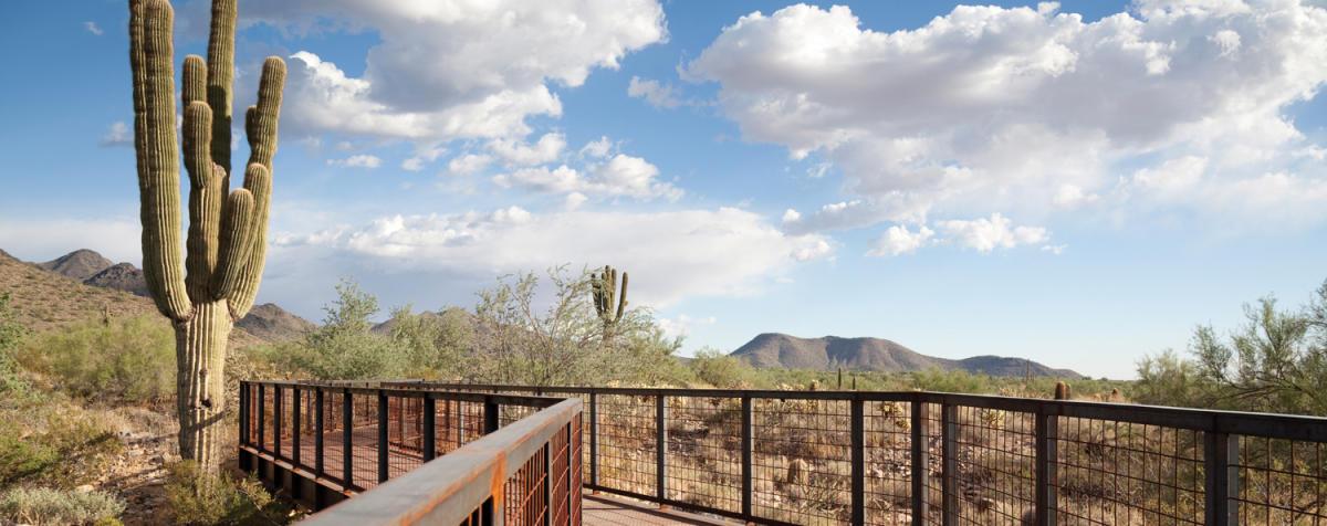 Mcdowell Sonoran Conservancy