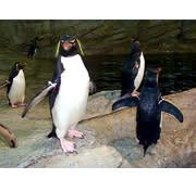 riverbanks zoo garden - Riverbanks Zoo Christmas Lights