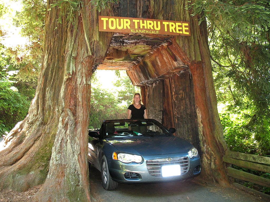 Drive through a redwood arubaitofo Images