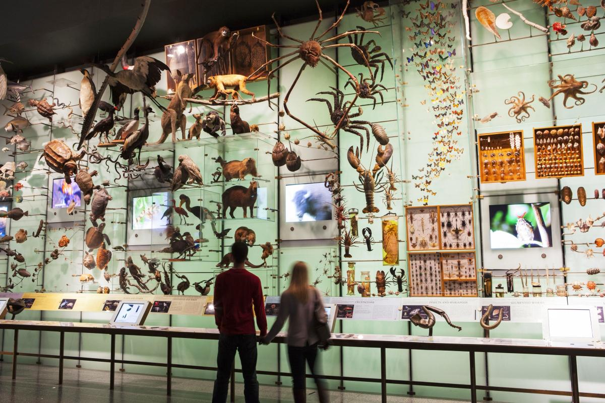 Hall Of Biodiversity Museum Of Natural History