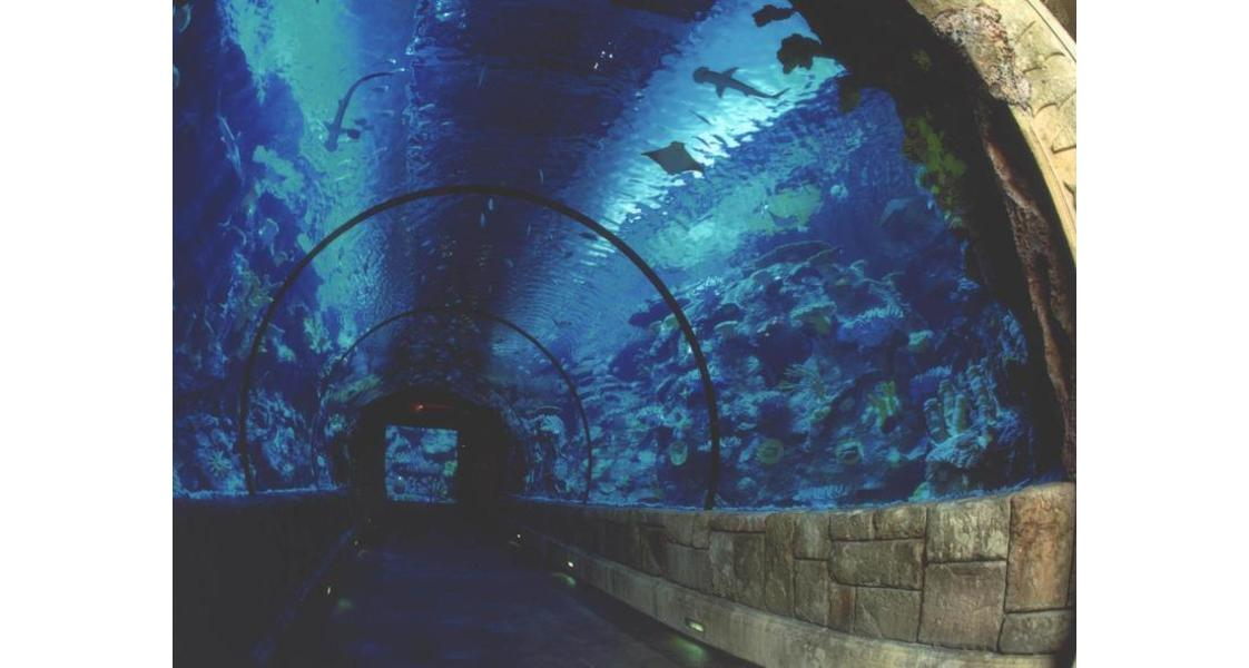 Shark Reef - Mandalay Bay