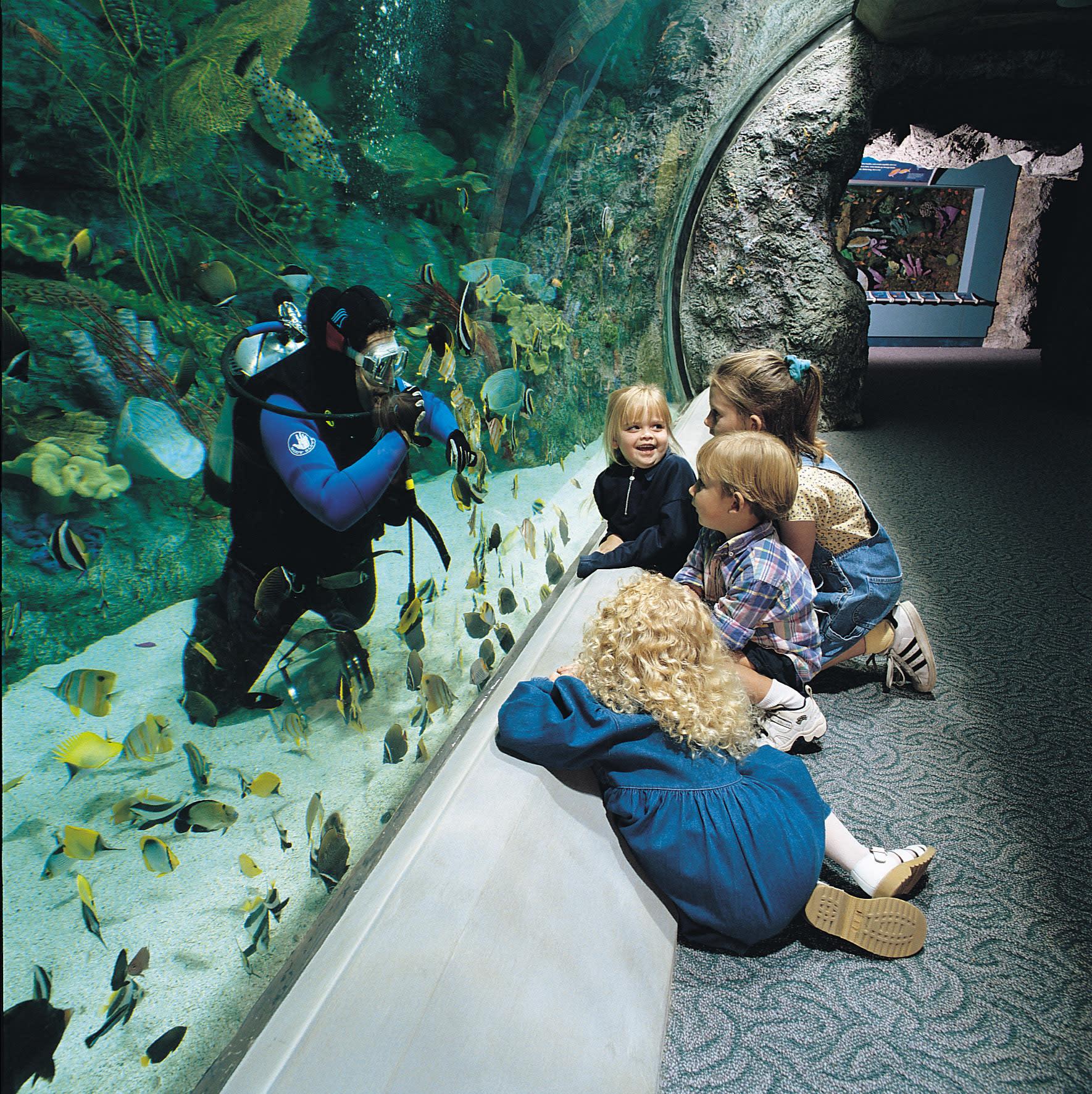 aquarium the pacific. Black Bedroom Furniture Sets. Home Design Ideas