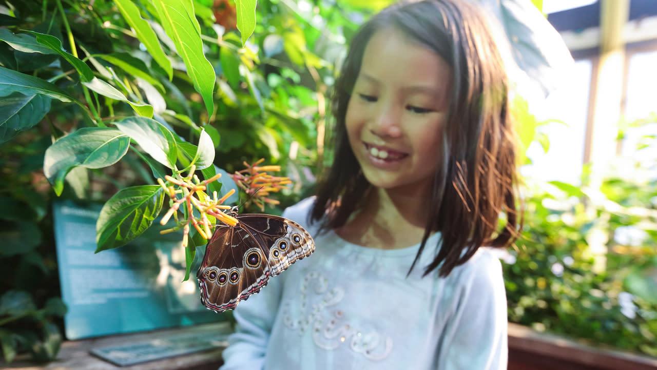 MOS Tyler Trahan_butterfly_garden