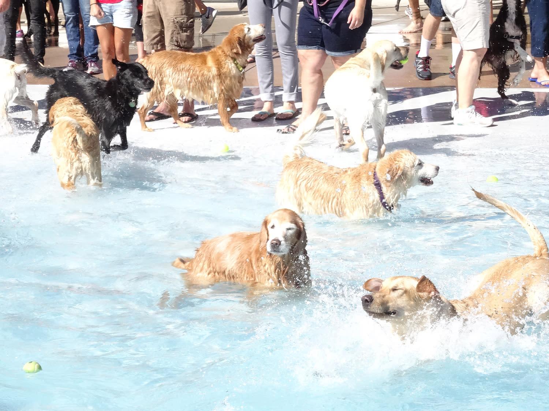 Doggie Splash & Pet Expo