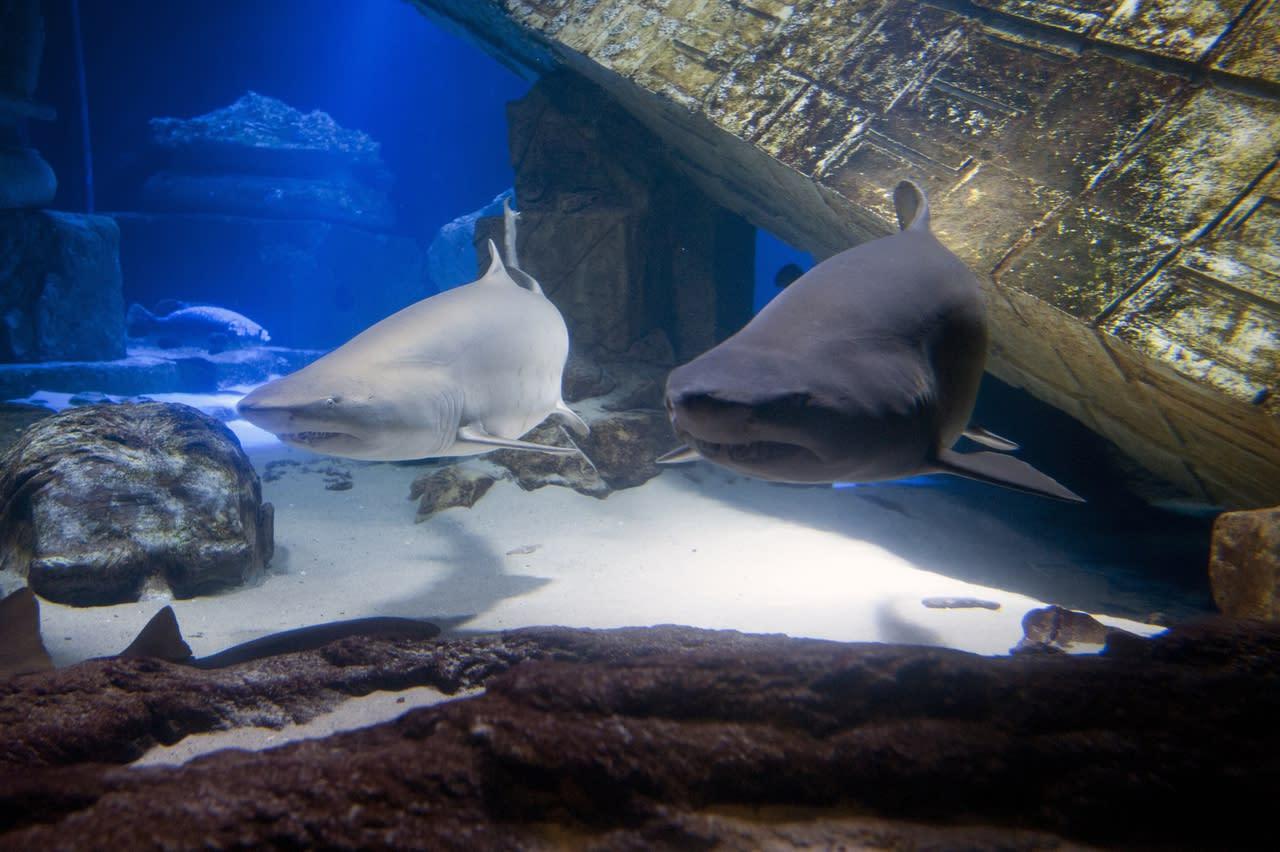 Long Island Aquarium | Riverhead, NY 11901