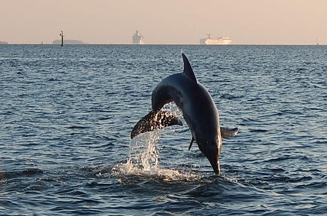 Dolphin Sightseeing Cruise from Tampa