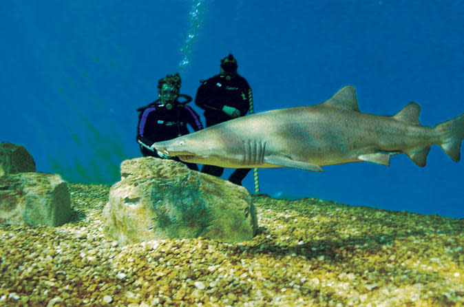 Tampa Shore Excursion: Dive with the Sharks