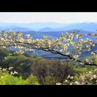 Video: Stunning Spring Blooms