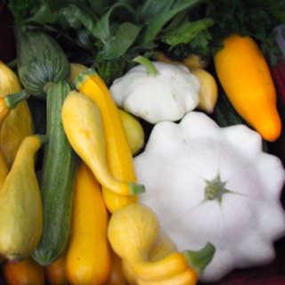 Foodtopian Spotlight: Summer Squash Recipes