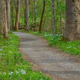 Wildflowers on Oconaluftee River Trail