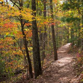 Bent Creek Trail at the NC Arboretum