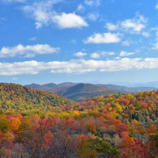 Asheville Fall Color