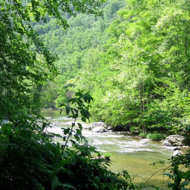 Hiking Trail: Laurel River