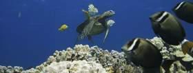 Honu (Hawaiian green sea turtle)