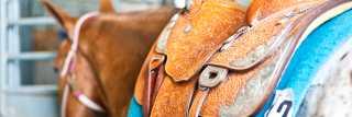 Expo Horse