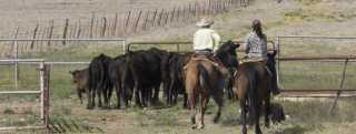 Agricultural & Ranch Products Header