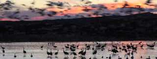 Video Thumbnail - youtube - Bosque del Apache at Sunset