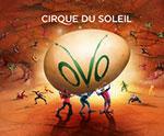 Cirque du Soleil OVO - Nav Primary