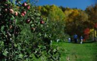 Terrace Mountain Orchard