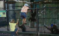 Utica Zoo 513